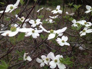 spring-flowers-medium-v3