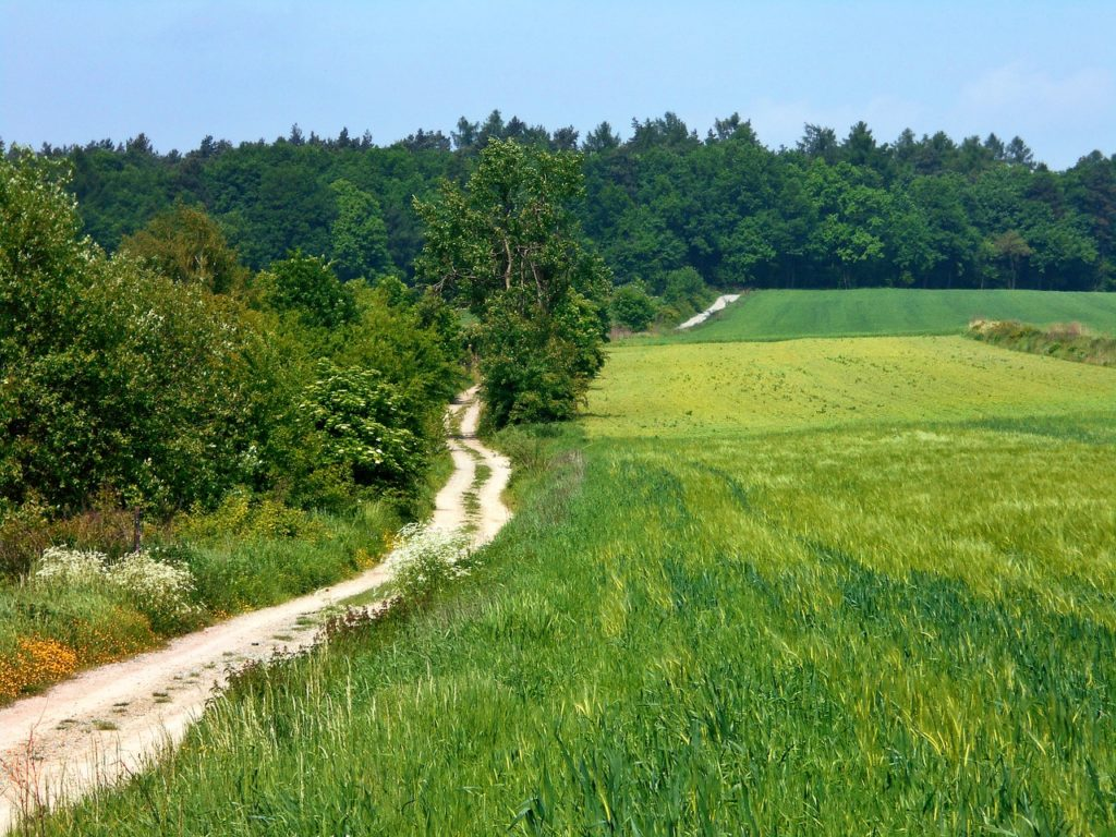 green-fields-2
